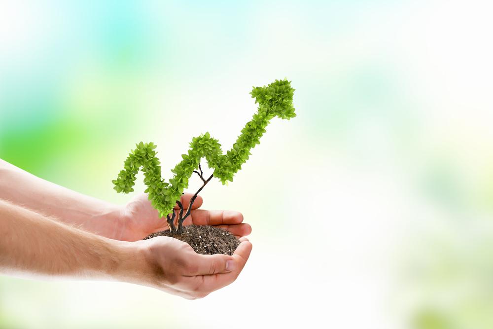 Image of human hands holding plant shaped like arrow